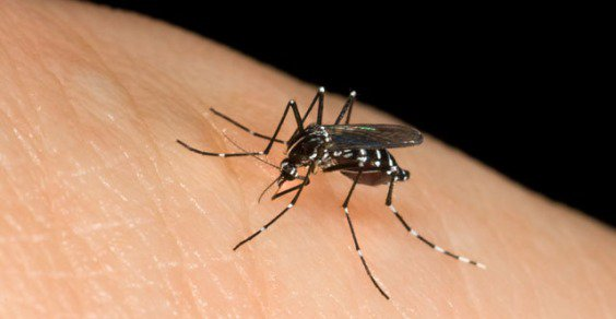 Zanzare: rimedi e soluzioni