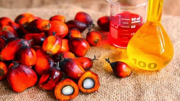 Olio di palma: rischi