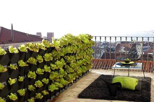 Piantare a Settembre: orto in città - Blog Agenzia Stella Cadente