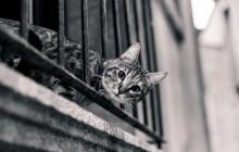 Zoonosi: le malattie trasmesse dai gatti