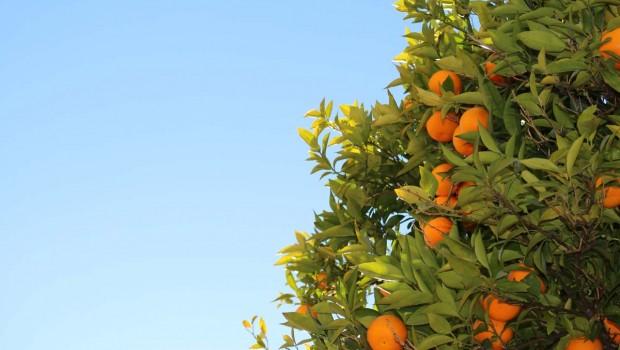 Piante Da Frutto In Vaso : Piante da frutto in vaso un frutteto sul terrazzo